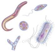 pasozyty1