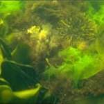 alga4